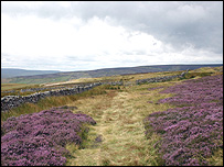 Heather in the Yorkshire Dales
