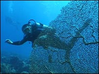 Diving amongst the coral (BBC)