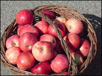 Basket of apples from the Chernobyl area