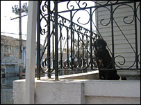 Sad dog in New Orleans house