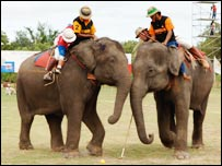 Elephant polo team