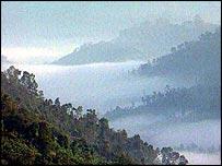 Bosque tropical. BBC.