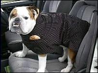 Dog coat - Trover Coats
