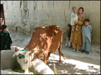 Saima with her kids and her cow