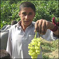 Asad Khyl boy with a bunch of grapes