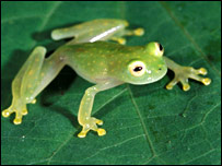 Amphibian, Conservation International