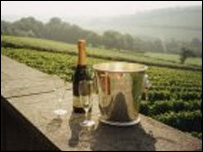 Cornwall Sparkling Brut: Camel Valley Vineyard