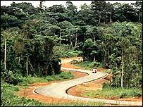 La selva en la cuenca del río Congo está en peligro.
