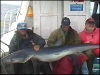 Blue shark captured off the west Wales coast