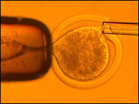 Embryo cloning (Wang et al)