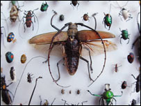 Insects on display (Natural History Museum)