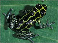 Frog (generic) (Courtesy of Conservation International/Don Church)