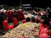 Agricultores en Guatemala.