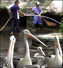 Zoo employees clean a cage as the park is being closed for three weeks, 19 September 2005.