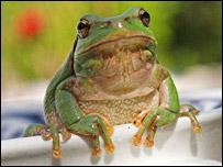 Frog (BBC)