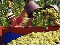 Grape harvesters bring in the Muscadet crop.  Frank Perry/AFP/Getty Images