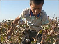 A boy picks cotton in Uzbekistan. Copyright: Thomas Grabka