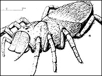 The original spider-like impression of the Megarachne servinei
