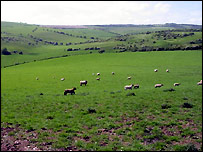 South Downs (picture courtesy of Chris Todd)