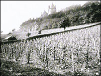 The vineyards, picture copyright: Natiional Museums & Galleries of Wales