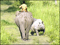 Elephant and rhino at Kaziranga