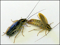 Cockroaches, Science