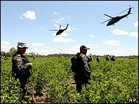 Colombian army operations in coca fields