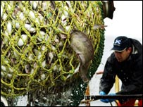 Cod and haddock net
