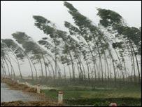 Trees in northern Vietnam, 27/9/05
