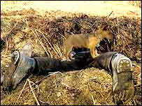 Terrier man