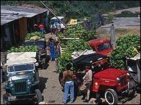 Bananeros en Colombia.