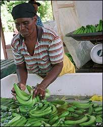 Jamaica forma parte de la ACP.