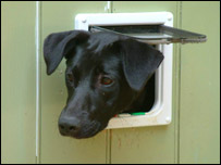 Dog looking through catflap, BBC