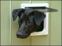 Un perro mira al exterior desde una puerta para gatos