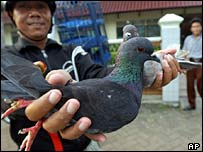 A man prepares to release race pigeons in Jakarta, Indonesia