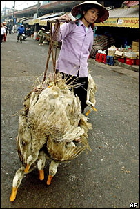 Vietnamese woman carrying ducks