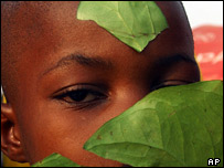 Tola Odewole looks through leaves believed to have high medicinal values in Lagos, Nigeria