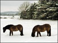 Horses near the England-Scotland border
