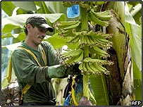A worker in a banana plantation in Costa Rica