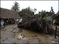 Un hombre camina junto a un �rbol derrumbado por el hurac�n Stan en Curazao, Veracruz, M�xico