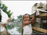 A young Indonesian boy plays with pigeons on September 28, 2005, in Jakarta, Indonesia