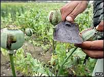 Opium filed