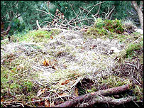 Osprey super nest