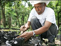 Coffee grower tending his crop