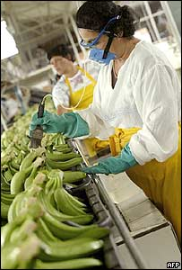 A worker applies fungicide to bananas at a processing plant in Costa Rica