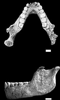 LB6 remains - scalebar = 1cm (Morwood/Brown/Nature)