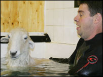 Lamb Chop in the hydrotherapy centre (picture Tony Mottram /Rhyl & Prestatyn Visitor)