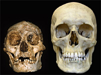 Comparison of H. floresiensis (L) and H. sapiens (R)