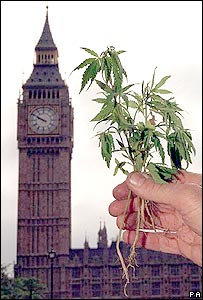 Parliament and cannabis