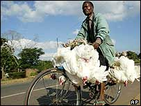 Malawi chicken seller